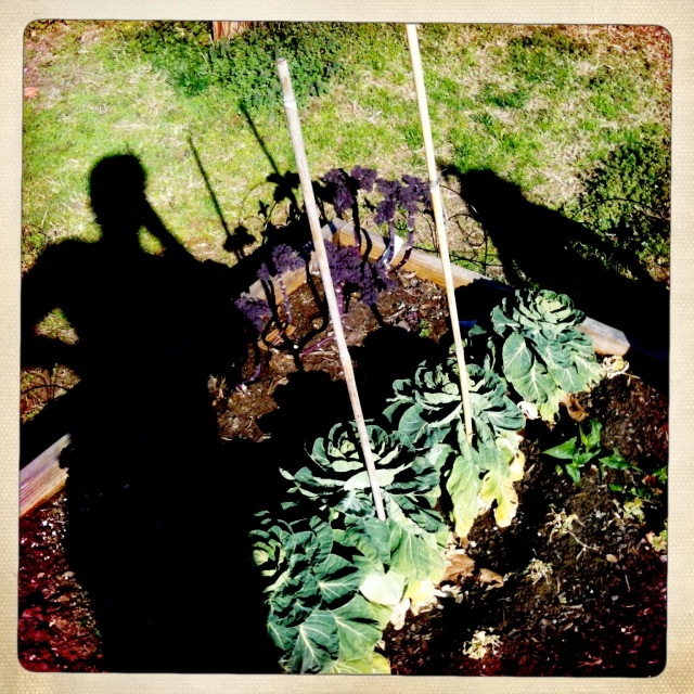 Shadows of mother and daughter standing over the last of the winter garden