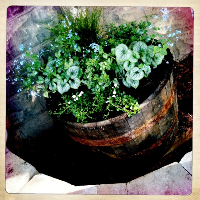 barrel planter filled with shade plants